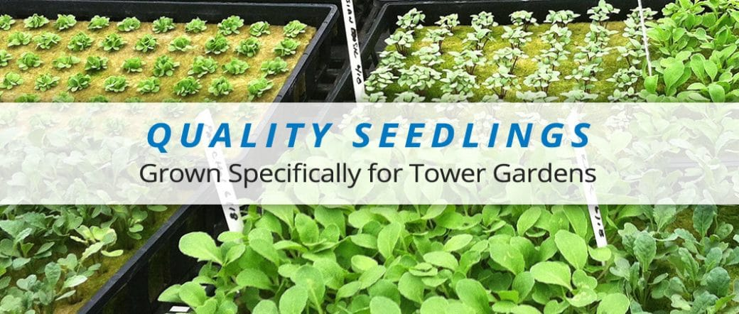 Quality Seedlings for Tower Gardens