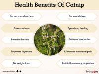 Catnip Benefits