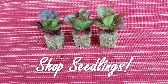 Shop Tower Garden Seedlings!